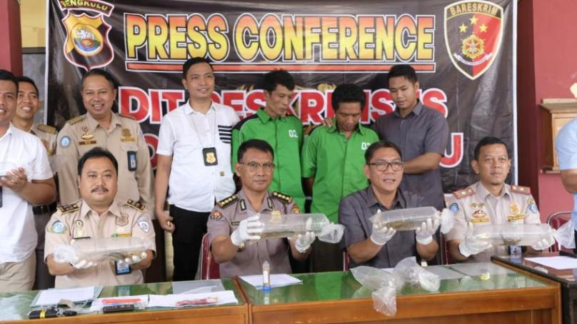Press conference pengungkapan penyelundupan bibit lobster.